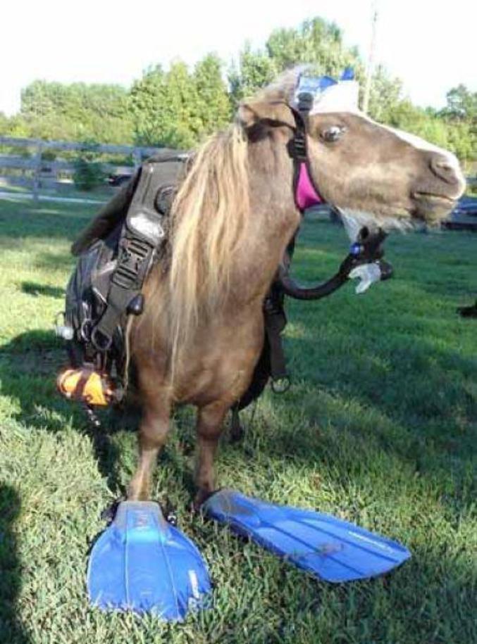 Mon petit poney, emmène moi dans ton pays magique !