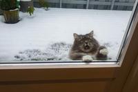Le gaz anti-chat a été lâché dehors