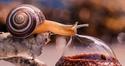 Le bistrot de l'escargot