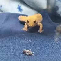 Chopage d'insecte