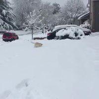 Va chercher dans la neige !