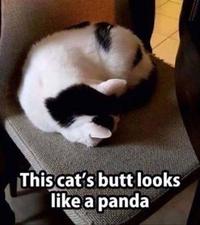 Où est le panda ?