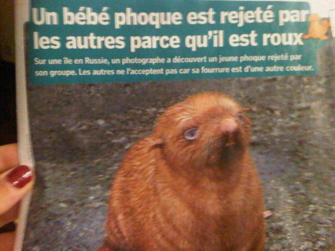 Un phoque rejeté pour sa couleur de peau et son odeur nauséabonde.