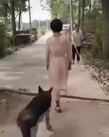 Un chien altruiste