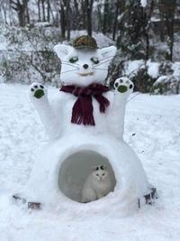 Bonchat de neige