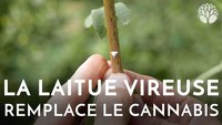 L'alternative au cannabis