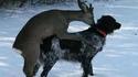Un chien de chasse