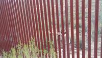 Le Mur Trump