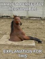 Un remede de cheval