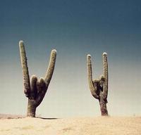 Cactus metalleux