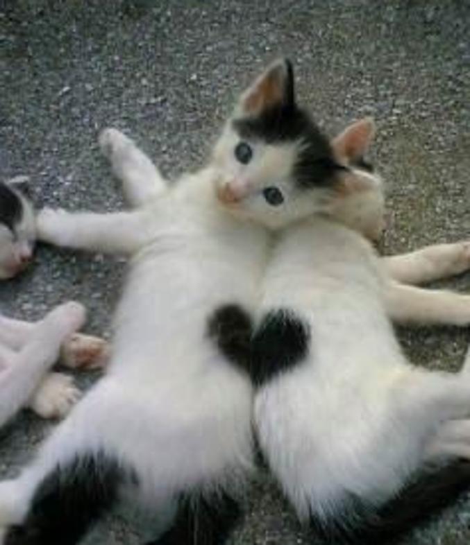 Eux qui t'aimes tant.