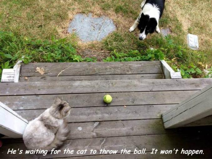 Le chien attend que le chat lance la balle. Il peut attendre.