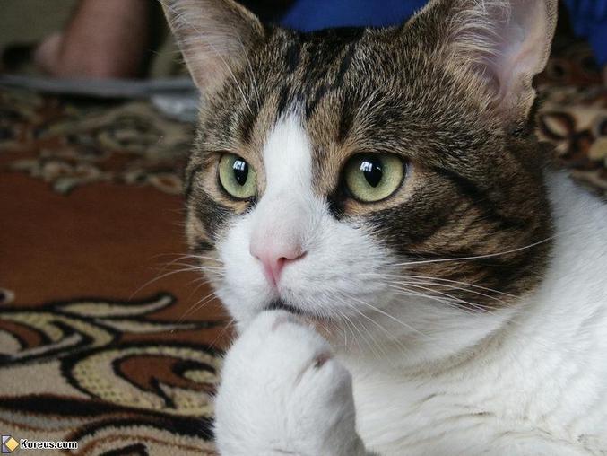 """""""... ce chat pensif""""   Quand je vois des chats je pense forcément à leur némésis."""