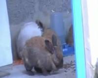 Le rap de pépin le lapin