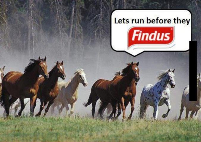 """Des boeufs en vadrouille (Cpt Obvious : Findus en anglais = Find us = en français, """"Nous trouver"""")"""