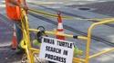 Recherche de tortue ninja en cours