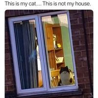 Lui, c'est mon chat