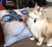 Un chat et un coussin