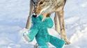 Coyote et peluche