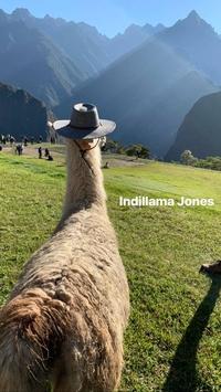 Les aventures d'Illama Jones
