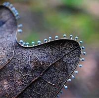 De minuscules champignons qui poussent sur la bordure d'une feuille morte