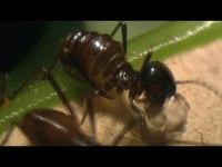 Une plante carnivore qui mange 6000 insectes à l'heure