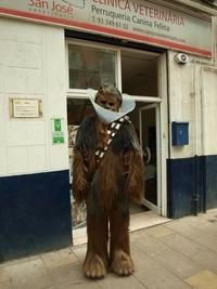 Chewbacca sort de chez le véto...