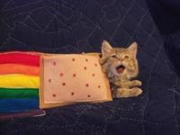Nyan cat IRL 3