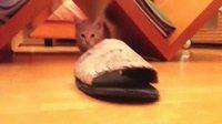 Piège à chat