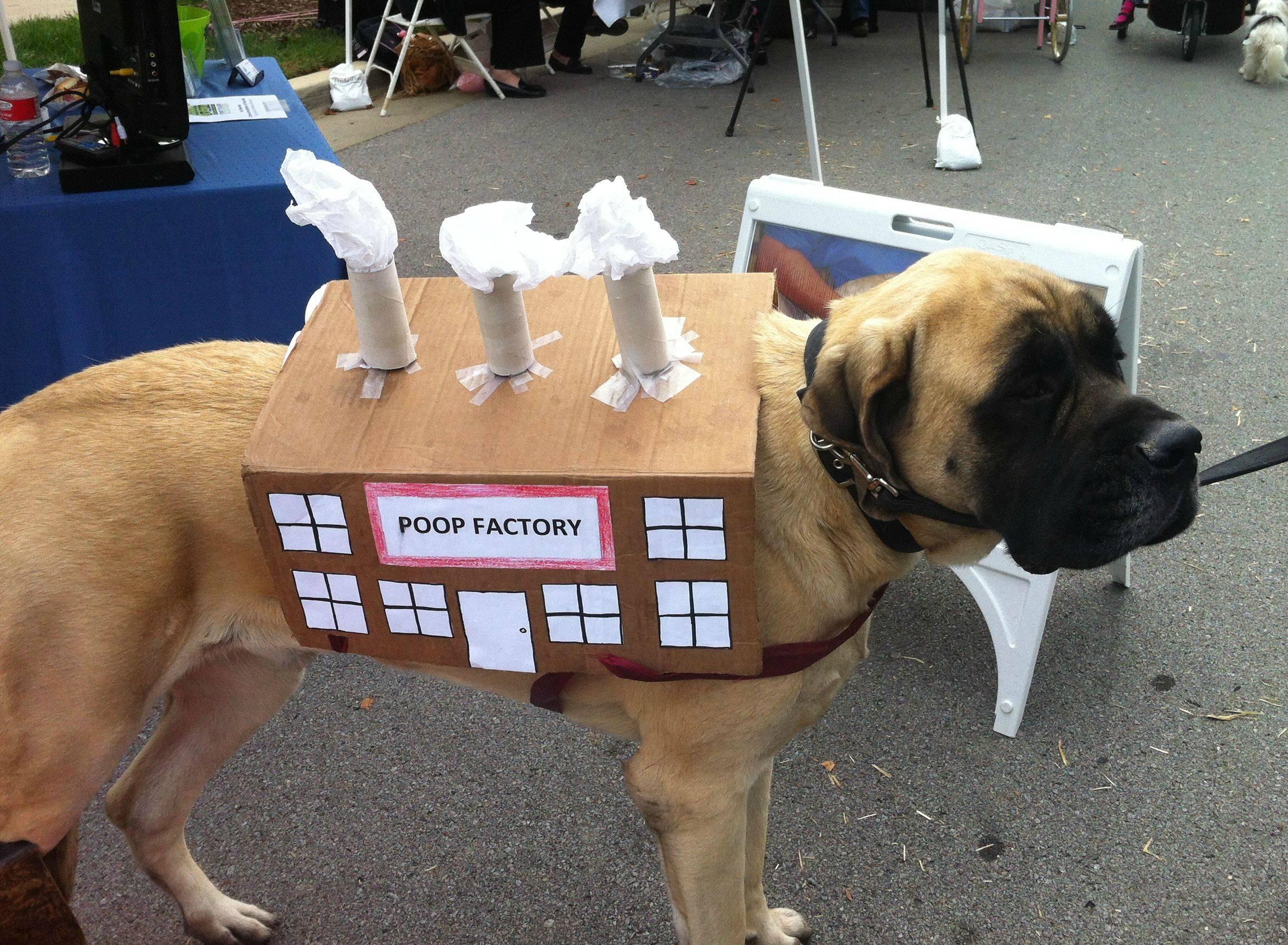 D guisement pour chien 3 - Deguisement halloween chien ...
