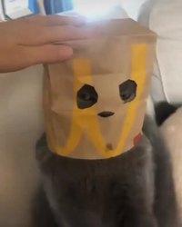 Mc Cat