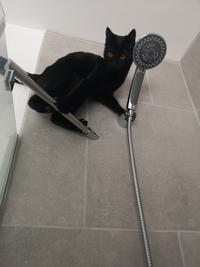 Vous prenez votre douche, vous levez les yeux...