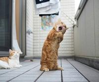 Chante jusqu'à la mi-Août !