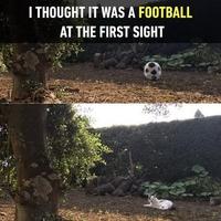 Un ballon ?