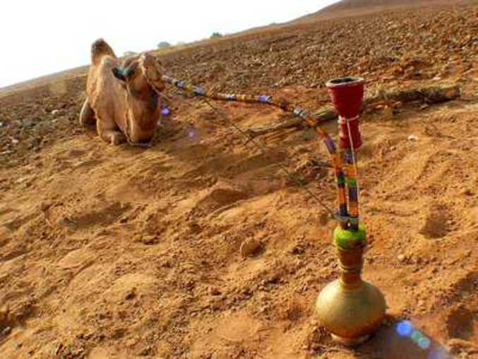 Un dromadaire fume tranquillement dans le désert.