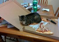 Saloperie de chat