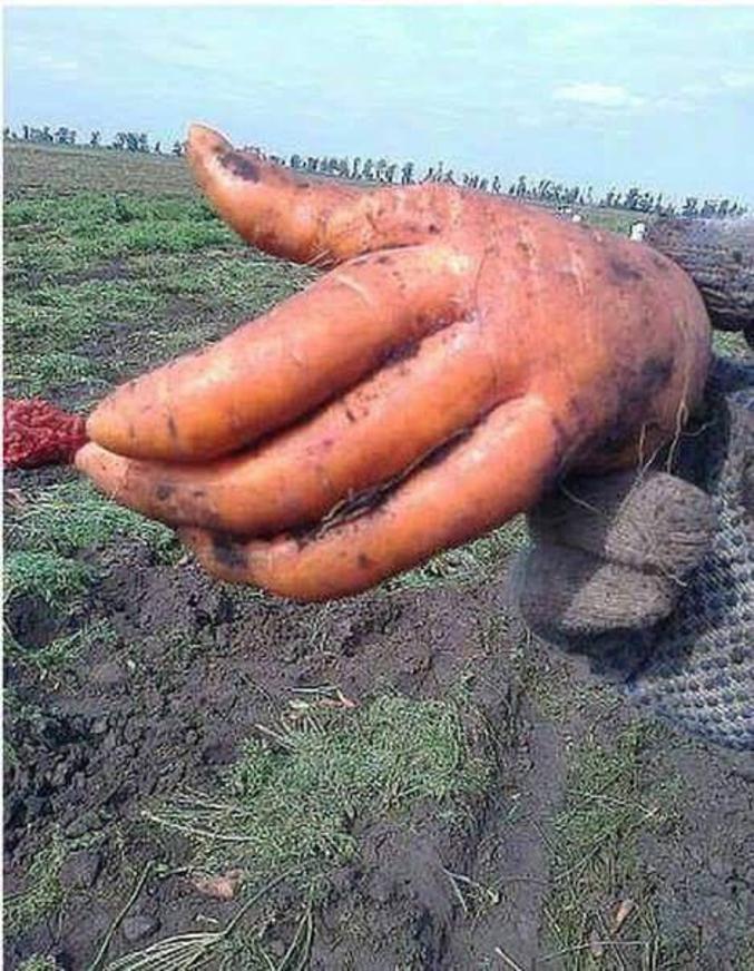On se serre la carotte.