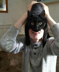 Batcat 3