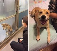 Un chien au chenil, le même content d'avoir été adopté