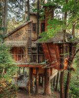 Petite cabane dans les bois