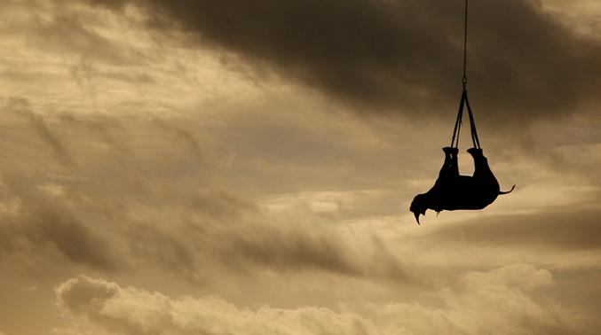 Afin de protéger cette espèce menacée par le braconnage, 19 rhinocéros ont été déplacés par hélicoptère, préalablement endormis et les yeux bandés, 1500 km plus loin.