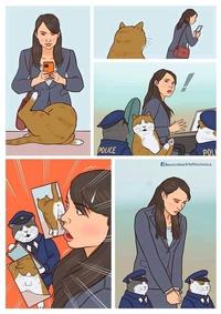 Le danger des photos de chat