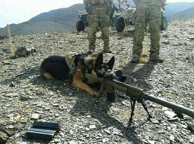 Le fameux chien de fusil.
