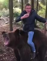 Tu vas pas me croire mais hier soir je suis rentré en ours!