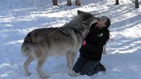 Qui craint le grand méchant loup ?