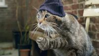 Si les chats avaient un pouce