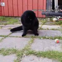 Croisé de chat, de chien et de poisson rouge