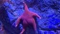 On a retrouvé Patrick !