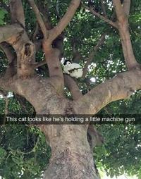 Chat dangereux