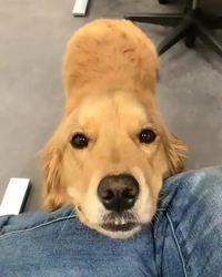 Juste un bon chien-chien